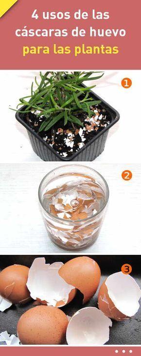 4 usos de las cáscaras de huevo para las plantas