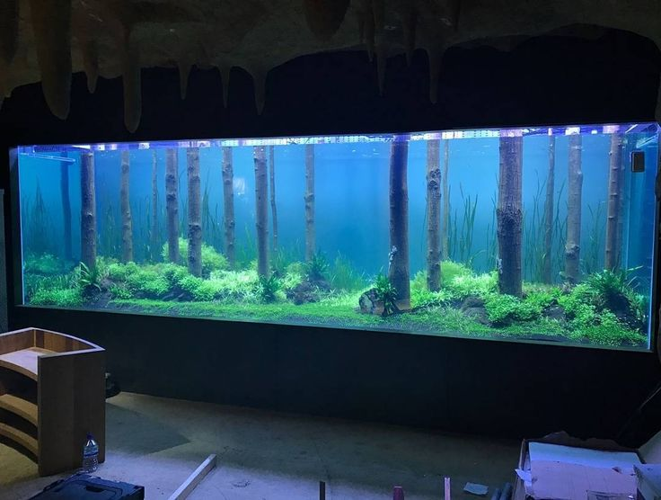"907 Likes, 10 Comments - I Love Aquarium (@aquarium_insta) on Instagram: ""❤️ DoubleTap & Tag a Friend below⤵ Following @aquarium_insta for some awesome photos !!! If you…"""