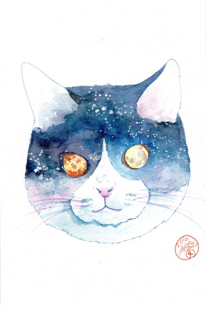 Night Sky Cat/夜空猫 (2016.1.4)