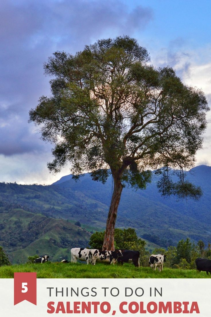 Perched on a plateau overlooking the verdant Quindio river valley, Salento is awash with vibrant color and culture; surrounded by emerald beauty. Click here to find out the best that Salento Colombia has to offer!
