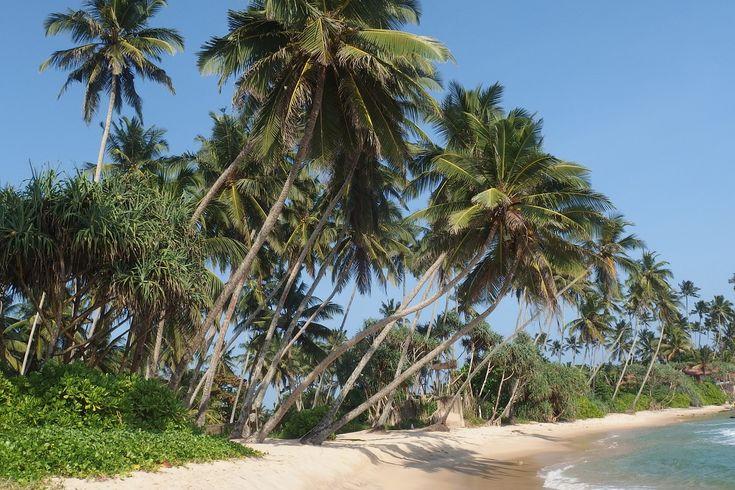 Günstiger Sri Lanka Urlaub mit ayurvedischer Verpflegung, Behandlungen, Yoga, Meditation, Fitness u.v.m. im schönen Ayurveda-Hotel am langen Sandstrand...