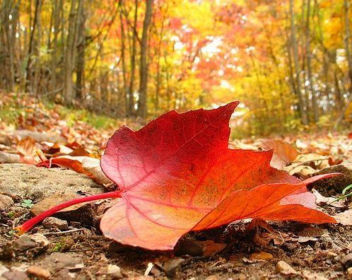 Google Image Result for http://3.bp.blogspot.com/-fR4R6Ihqgk4/Tq3HkdtH0yI/AAAAAAAAAIc/APn00Kb-5AE/s1600/autumn-leaf.jpg