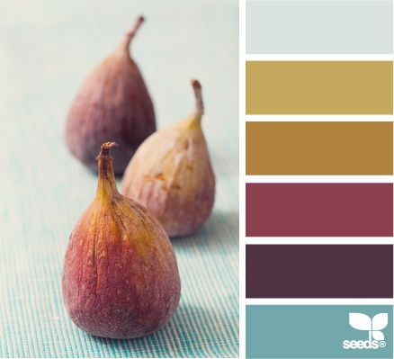 fig hues - I love the picture with the colors, but pulling them out as shown on the side I have never thought of mustard and aqua blue as going together.  I guess you need to have something like this picture to pull it all together.  Love the colors, but individually.