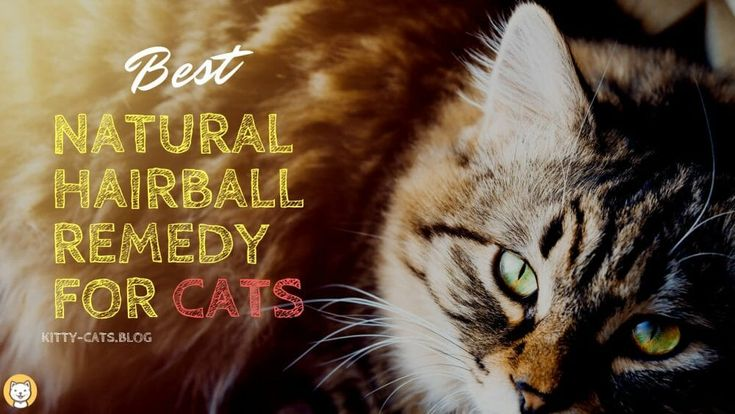 Best natural hairball remedy for cats hairball cats