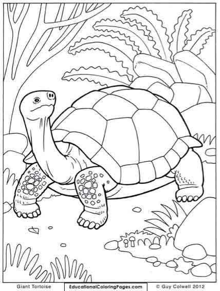 Раскраски с животными | Книжка-раскраска, Рисунки для ...