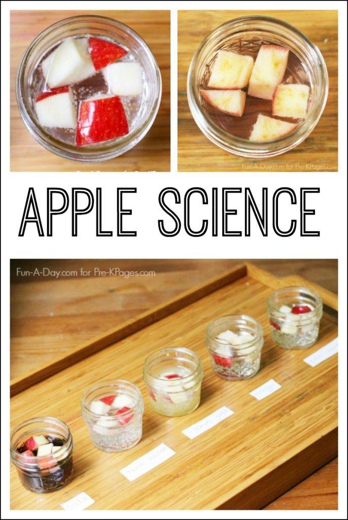 Preschool apple science experiment