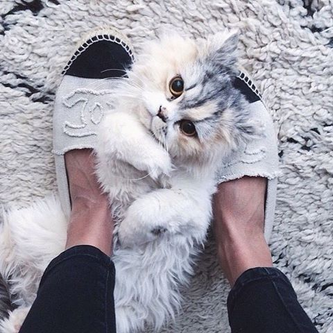 Chanel and kitties. // Follow @ShopStyle on Instagram to shop this look