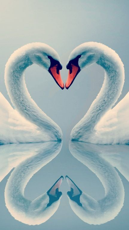 grace, soul-mate, awakening, longevity, swans have mates for life, if you have this totem, your twin flame will light when it's ready. nothing can force this natural flame. avor & enjoyyy it!