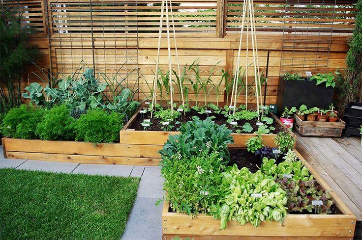 Imagine que maravilha uma horta assim no quintal de casa! veja algumas