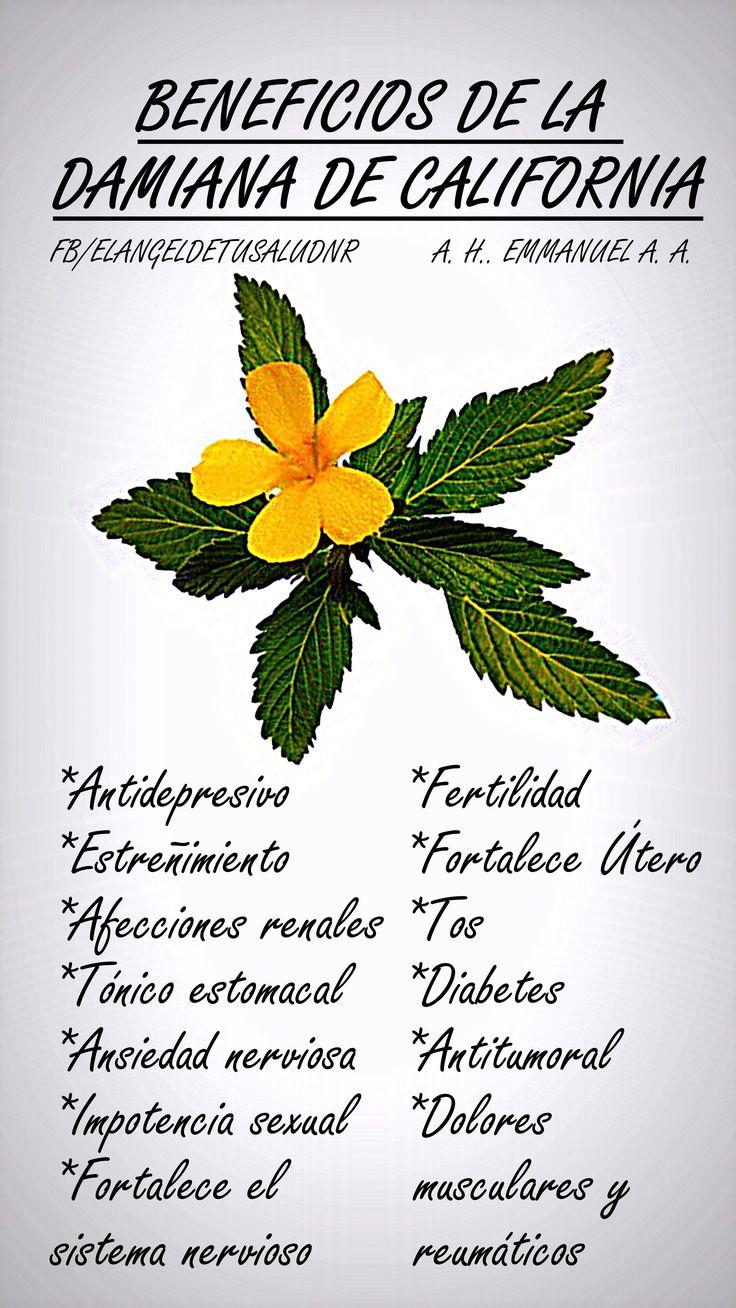 BENEFICIOS DE LA DAMIANA DE CALIFORNIA #SALUD #PLANTASMEDICINALES #DAMIANA