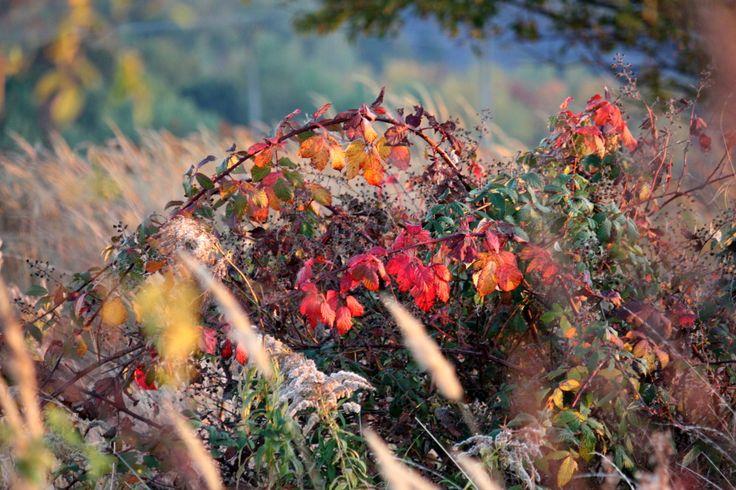Jesenné ľuftobranie:) Pozrite si krásne fotky jesennej prírody:)