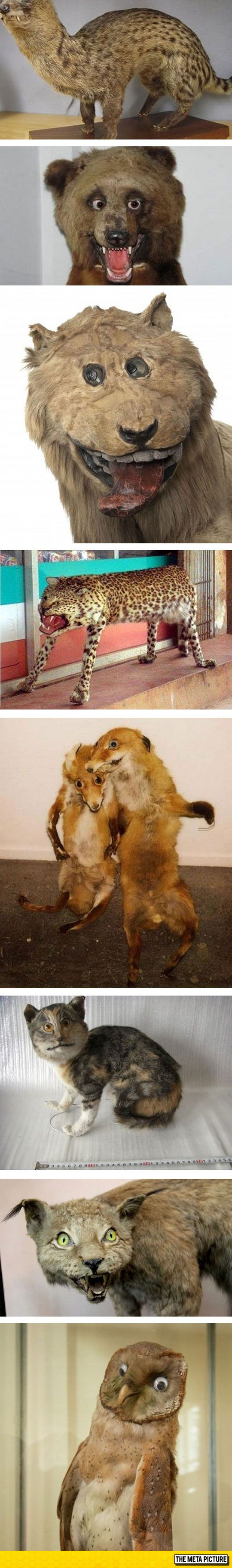 Taxidermy Gone Awfully Wrong