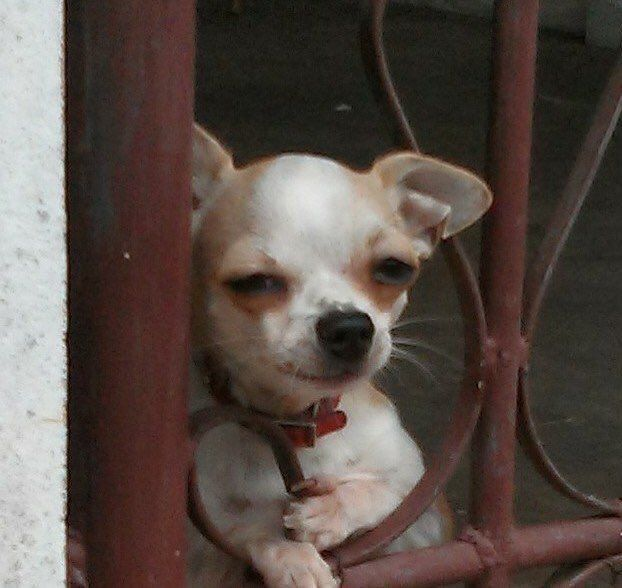 Rt Darkbinn Epน มาแบบน อ พ หน าขอมากกว าน โหน ย ก ฝปตานนน Myidisgangnambeauty Https T Co Njy2ty9lvm Azure ภาพหมาขำข น ช วาวา ร ปส ตว น าร ก