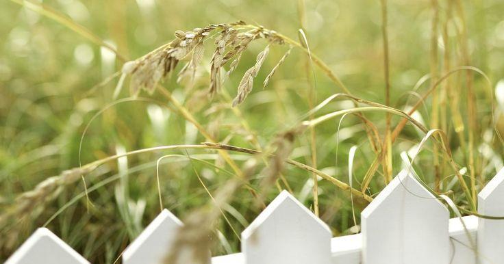 Como remover ervas daninhas sem matar a grama . Seu gramado está sendo invadido por ervas daninhas: o problema é como removê-las sem matar a grama? Isso pode ser feito se melhorarmos a saúde do gramado para então remover as ervas.