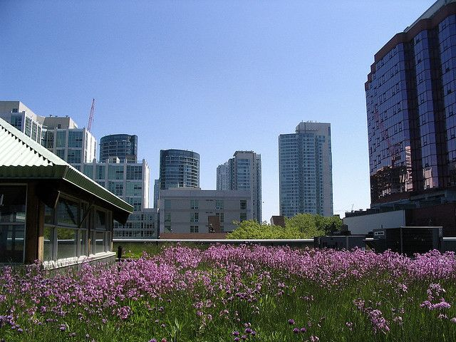 MEC's green roof