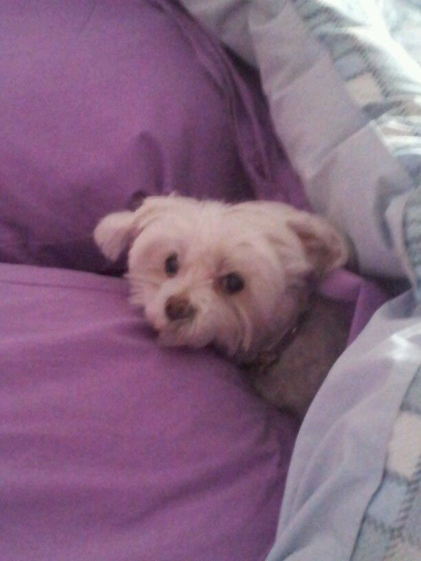Niki my pretty dog