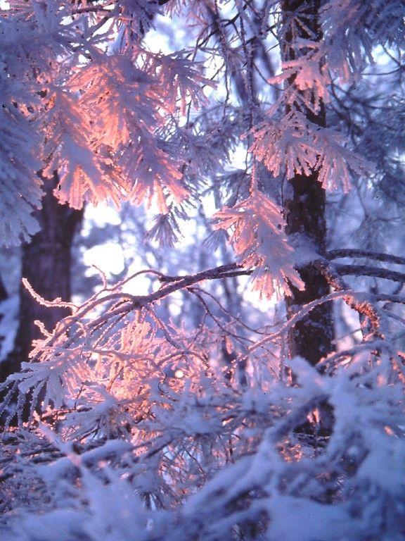 C'est l'hiver - www.enerioh.com