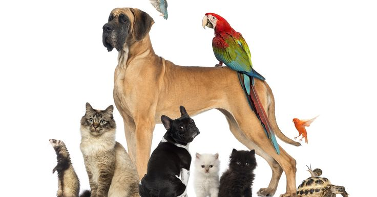 The Top 10 Family Pets
