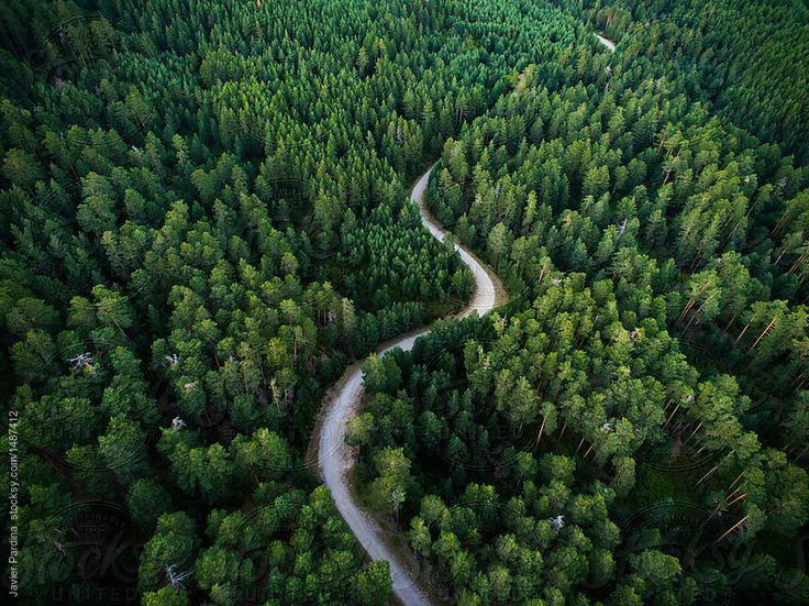 Aerial shoot of woods from Soria, Spain. by Javier Pardina for Stocksy United