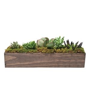 Giselle Succulent Trough (Click through for an exclusive discount): That, Gifts Thi Sets, Mothers Day Gifts, Decoration, Flower Gifts Thi, Flower Delivery, Gifts Idea, Diy'S Gifts, Awesome Gifts