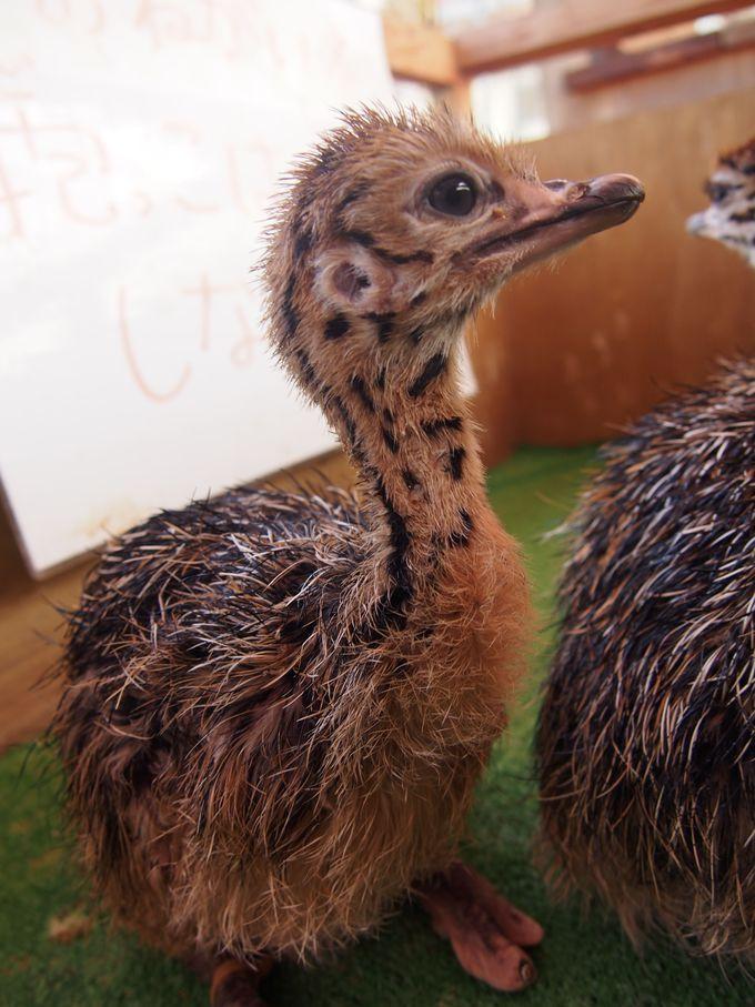 間近で見られる!触れ合える!子連れで行きたい動物園8選 | Travel.jp[たびねす]