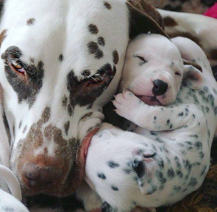 Puppy snuggles....too cute for words.