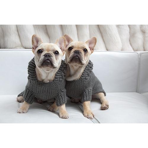 Twin French Bulldogs i...