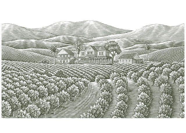 coffee plantation illustration - Google Search