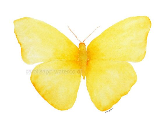 yellow butterfly painting archival 8 x 10 print by carolsapp, $18.00