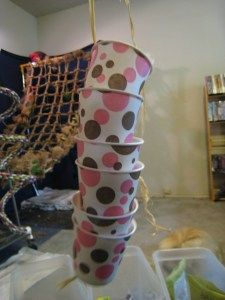 hide treats in a stack of dixie cups attached with string.  Great site for diy parrot toys