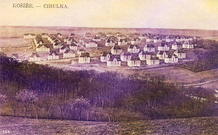 syrova_cibulka-foto.jpg (1660×1032)