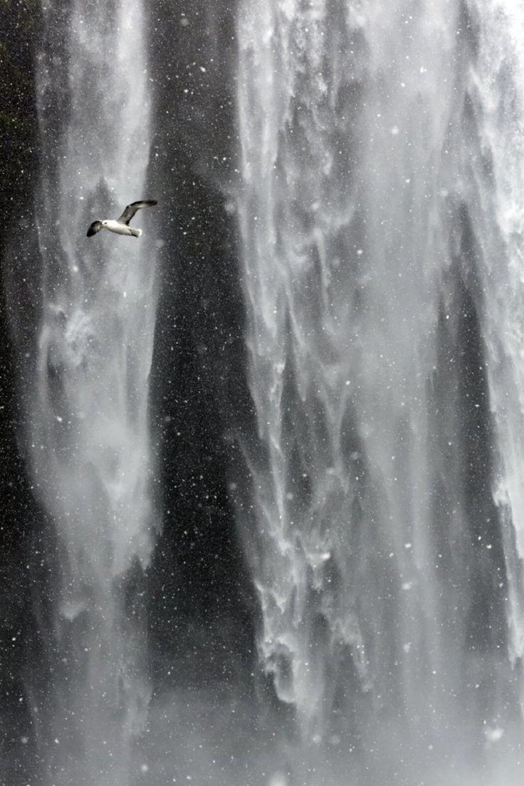13 best motionless journey - matthieu ricard images on pinterest