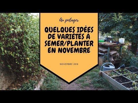 Quelques Idees De Varietes A Semer Ou Planter En Novembre Au Potager