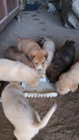 MIL ANUNCIOS.COM - Regalo cachorros. Compra-venta de perros regalo cachorros en Extremadura. Regalo de cachorros..