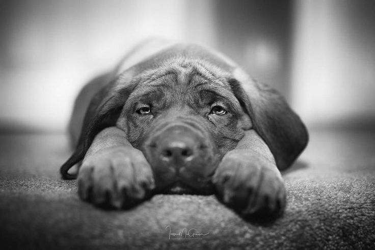 """Sad Eyes"" by Ian McGregor https://gurushots.com/ianmcgregor/photos?tc=2f714573798c4445d3810149174a9e47"