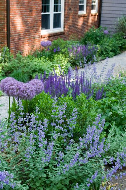 Purple garden planting of cooler colors with catmint, Nepeta mussinii, blending with mauve alliums and deep purple salvias.