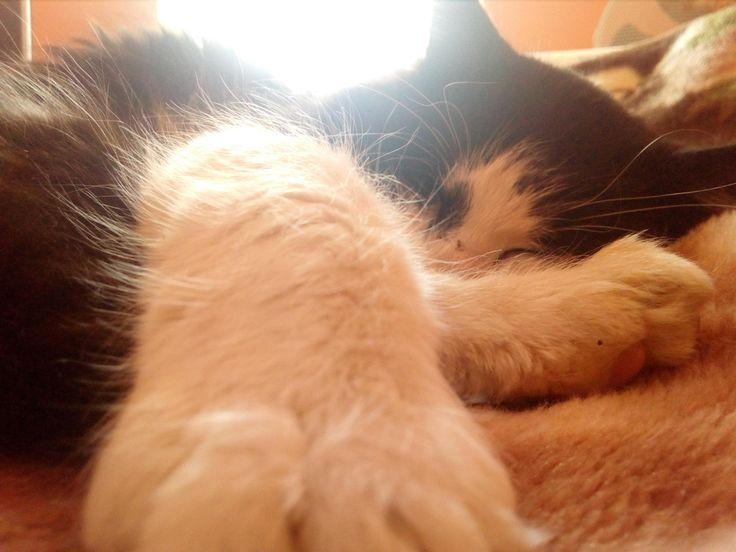 #Lukas #love  #cat