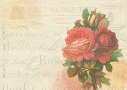 Rose, Stanowisko, Karty, Tle, Vintage