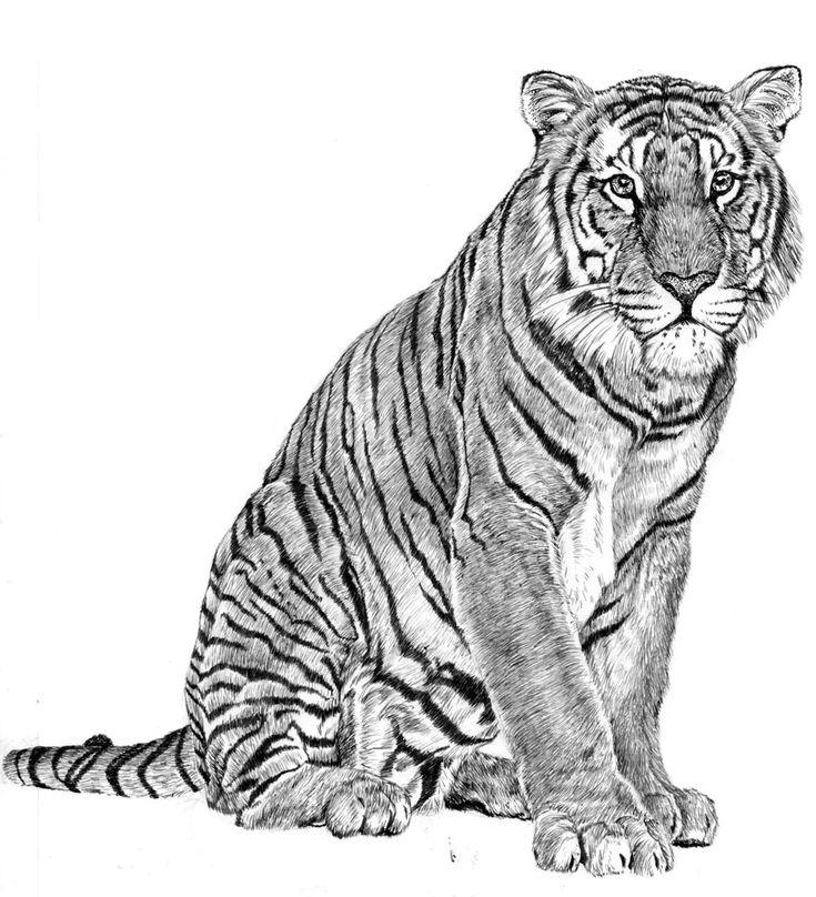25 Japanese Katakana Tattoos: 25+ Best Ideas About Japanese Tiger Tattoo On Pinterest