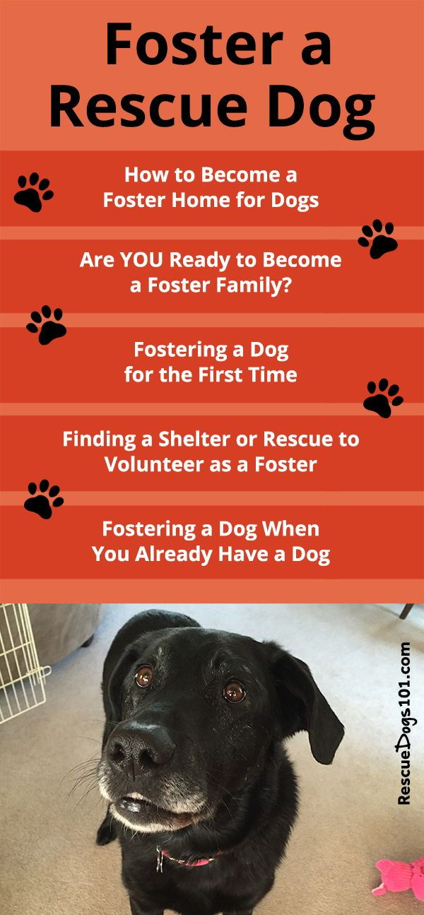 How To Become A Foster Home For Dogs Pet Care Tips The Fosters Dogs