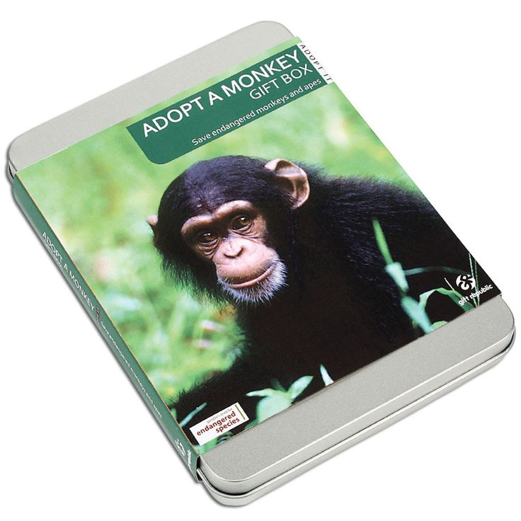 This Adopt A Monkey Gift is ideal for kids age 12 who have everything or you want to give them something unique.