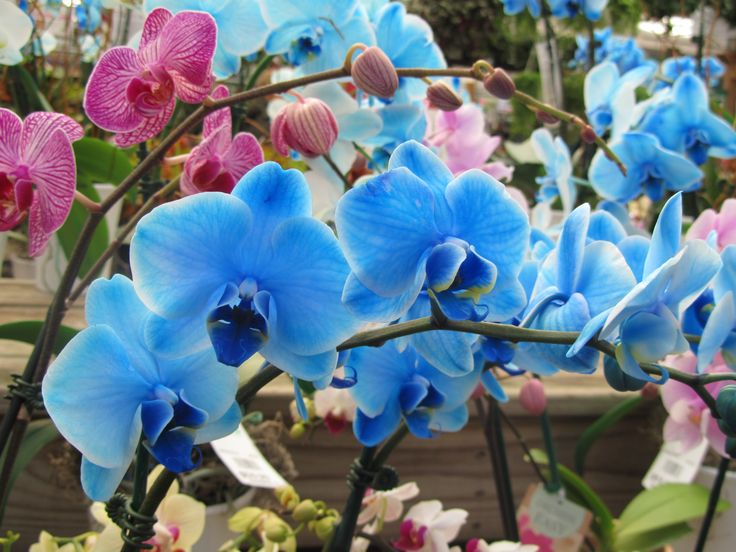 blue flowers and their names