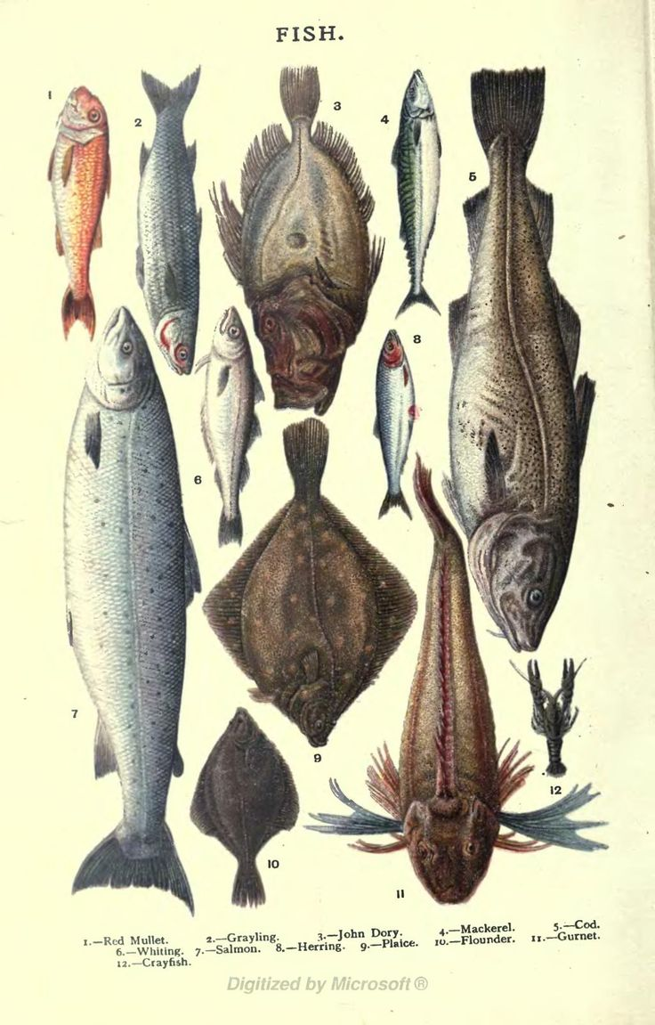 255 best fish illustrations images on pinterest fishing diy and