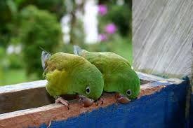 vogels. Ritme en herhaling