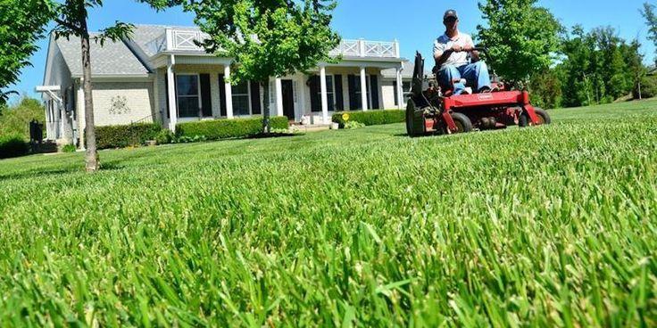 Creating An Environmentally Friendly Lawn Saint