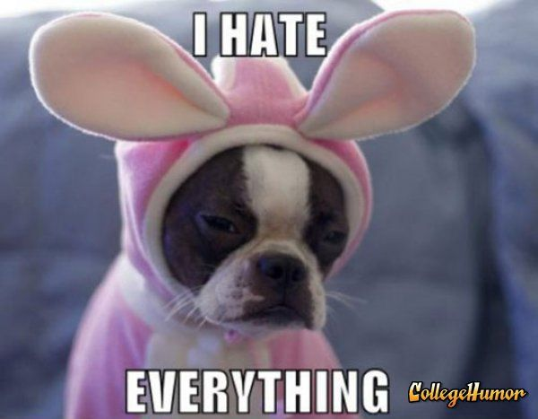 HahahaPuppies, Dogs, Dresses Up, Pets, Easter Bunnies, Funny, Boston Terriers, Animal, A Christmas Stories