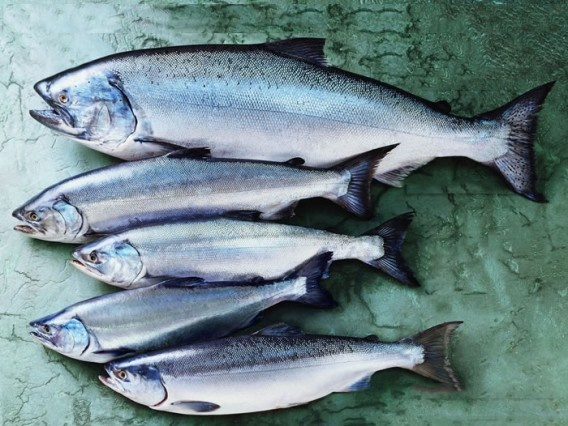 The Top Sustainable Seafood Choices