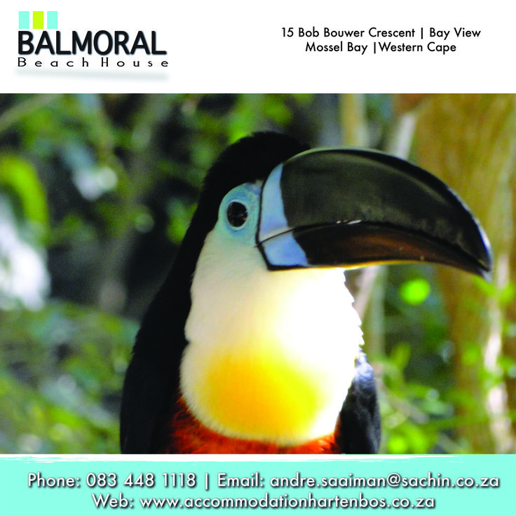 Birds of Eden, is the Garden Route's very own world class free flight bird sanctuary. So don't forget to go and visit the Bird of Eden when staying with us. #Activities #GardenRoute #Accommodation