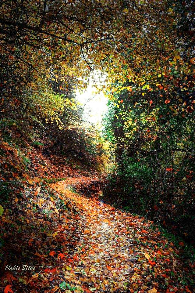 Path in the forest (no location given) by Makis Bitos