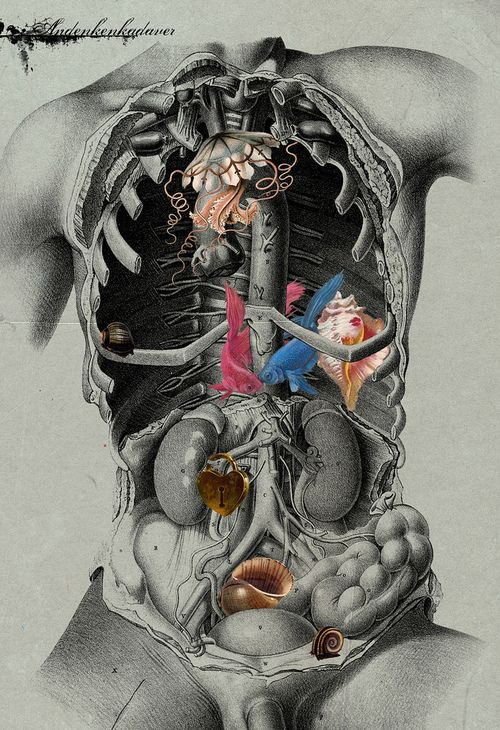 15 best images about Anatomy of the Human Body on